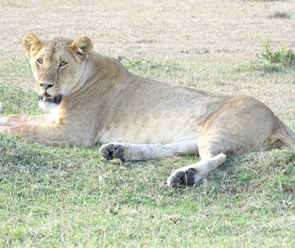 Nairobi National park day trip