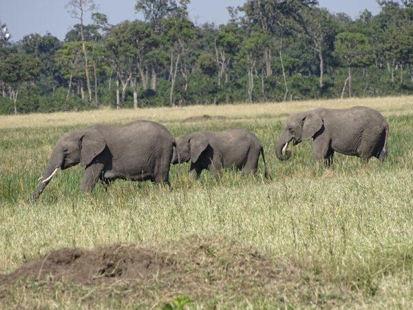 kenya holidays safari
