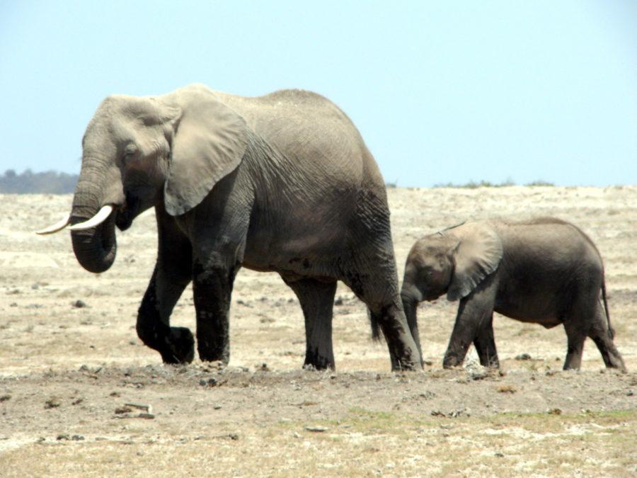 Mombasa safari