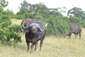 budget masai mara safari